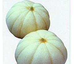 大型菊メロン